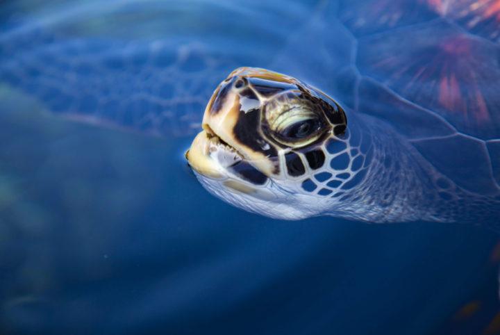 Maui Ocean Center Aquarium Plus image 1